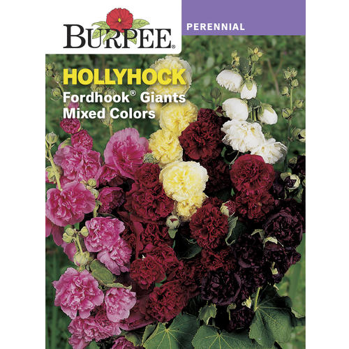 Burpee Hollyhock Fordhook Giants Mixed Colors Flower Seeds At