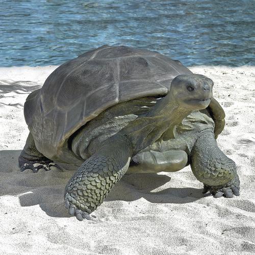25 X 59 Galapagos Tortoise Statue