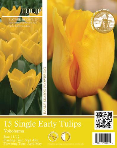 "Single Early Tulip ""Yokohama"" Flower Bulbs - 15 Count"
