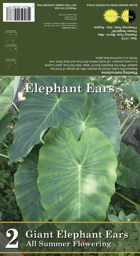 Giant Elephant Ear Bulbs 2 Count At Menards