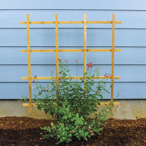 Astounding Enchanted Garden 35 75W X 48H Cedar Espalier Trellis At Pabps2019 Chair Design Images Pabps2019Com