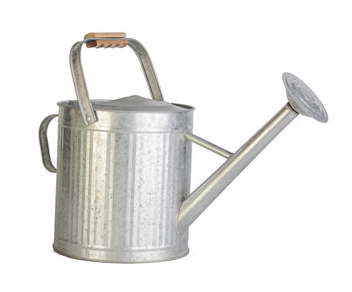 Enchanted Garden™ 2 Gallon Watering Can - Assorted Styles