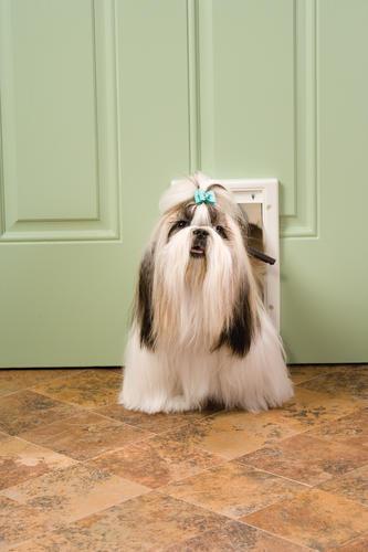 Petsafe Reg 5 12 X 8 87 Small Pet Door Replacement Flap