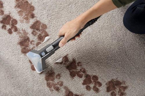 Hoover® Power Scrub Elite Pet Carpet Cleaner at Menards®