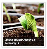Getting started with Planting and Gardening