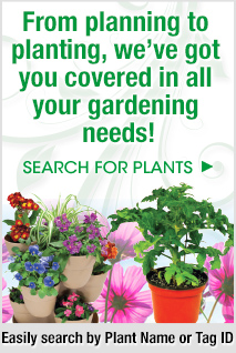 From planning to planting, we've got you covered in all your gardening needs! Click here to easily search for plants by plant name or tag ID.