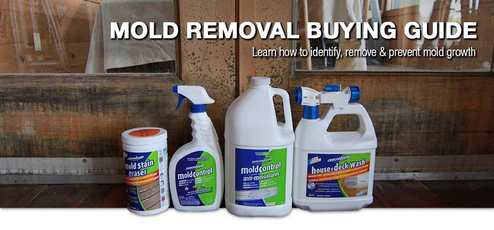Mold removal buying guide at menards solutioingenieria Image collections