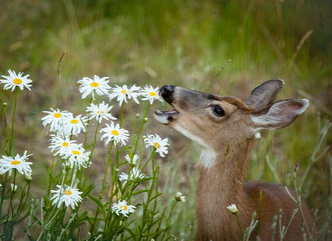 Guarding Your Garden From Deer At Menards