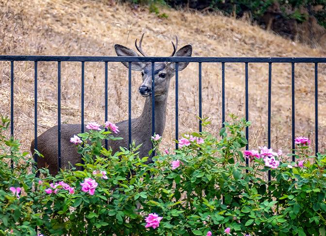 Guarding Your Garden from Deer at Menards®