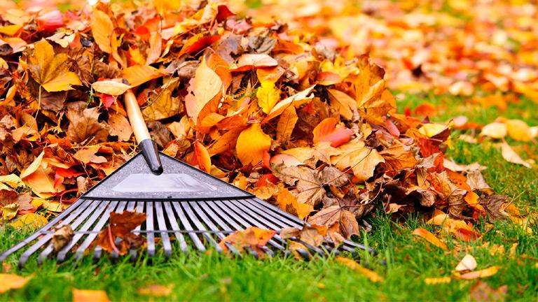 Image result for leaf removal