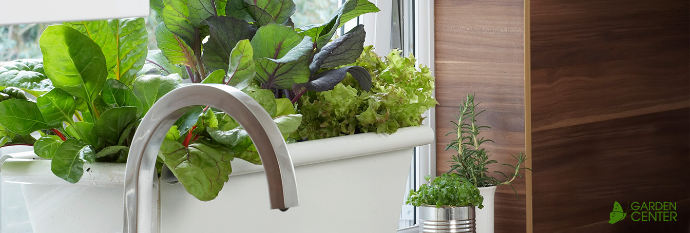 Growing Herbs Vegetables Indoors At Menards
