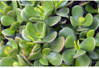 Hard-to-Kill Houseplants at Menards®