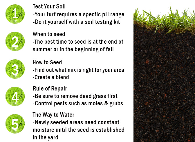 How to Seed & Repair Your Lawn at Menards®