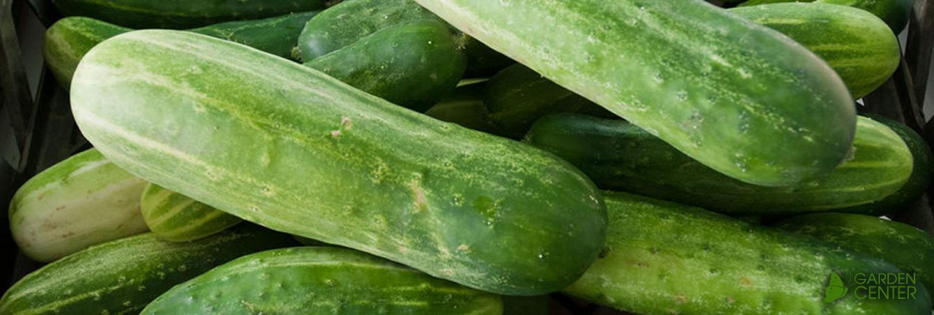 Cucumbers at Menards®