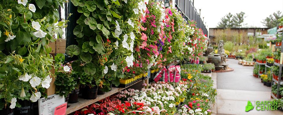 Vegetable Plants At Menards The Best Plant - Does menards deliver