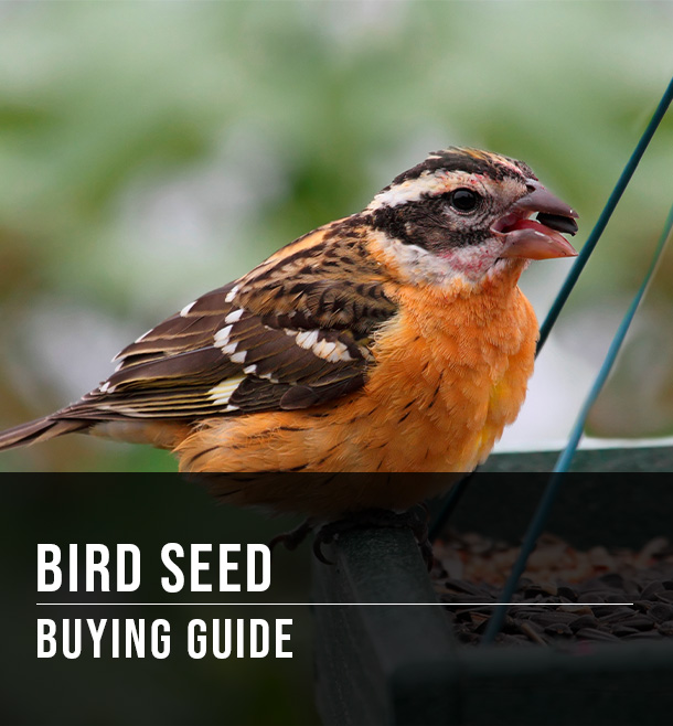 Feeding birds: a quick guide to seed types   all about birds all.