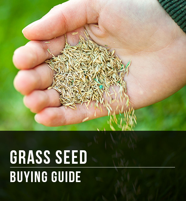 Grass Seed Buying Guide At Menards