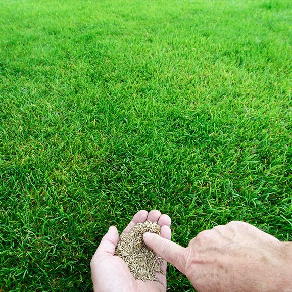Grass Seed Buying Guide at Menards®