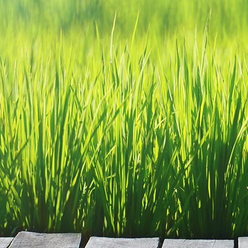 Lawn & Plant Care